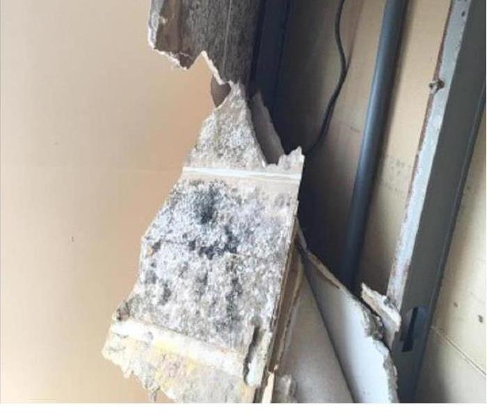 Black Mold Growing in Quincy, MA Before