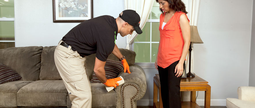 Quincy, MA carpet upholstery cleaning