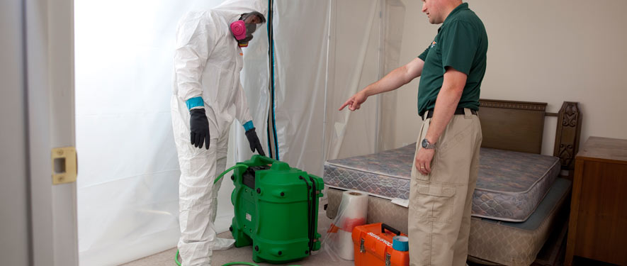 Quincy, MA mold removal process